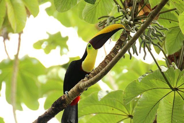 Le Parc national Manuel Antonio, une petite forteresse du Costa-Rica
